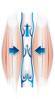 Ucisk wywoływany przez otaczające mięśnie dodatkowo wspomaga krążenie krwi w kierunku serca.
